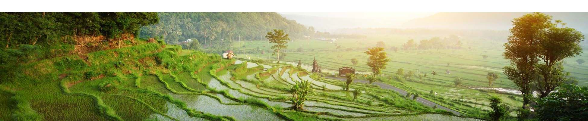 Indonésie bali rizières