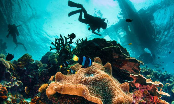 Plongee en thailande