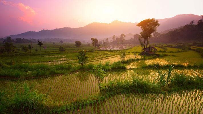rizières bali indonésie