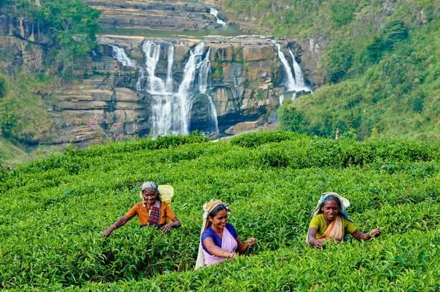 Circuit Privé Escale à Kandy + séjour Kalutara 3*sup - Sri Lanka