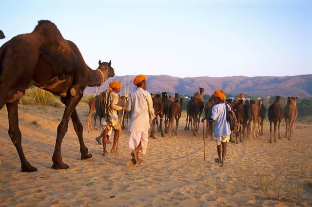 Au Pays des Maharajahs, Foire de Pushkar - Inde, Rajasthan