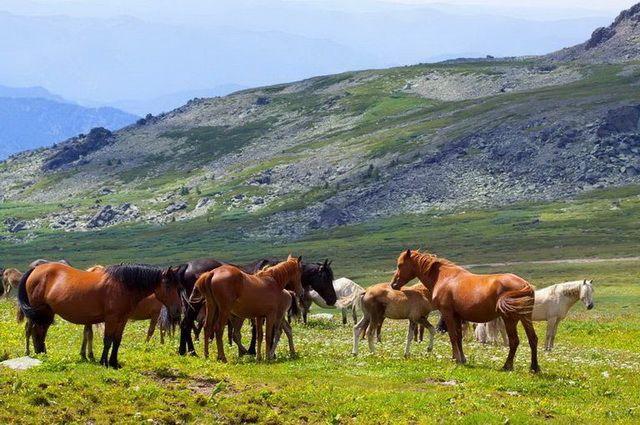 Mongolie - Circuit Pastorale Mongole