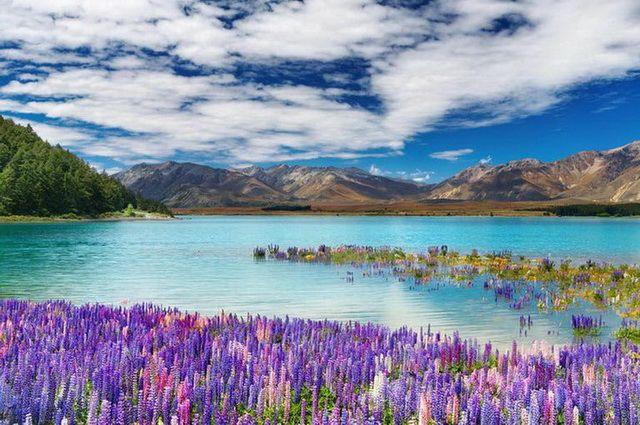 Nouvelle Zélande - Circuit Mosaïque Néo-Zélandaise