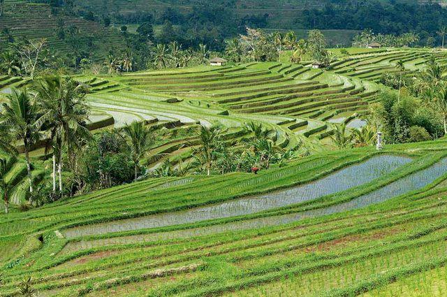 Bali - Indonésie - Circuit Bali Essentiel