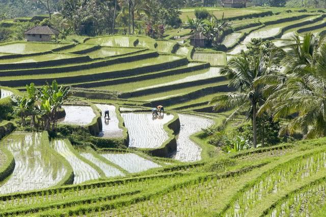 Bali - Indonésie - Singapour - Circuit La Java des Tropiques avec Séjour Bali 4*