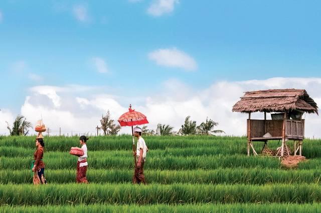 Circuit Pass pour Bali 3*