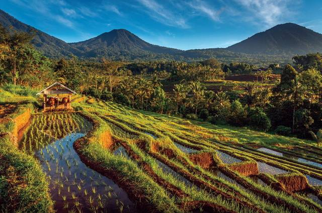 Pass pour Bali 4*