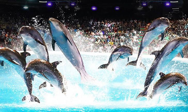 billet-entree-dolphinarium-dubai