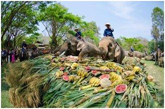 Excursion d'une demi-journée au camp des éléphants de Mae Sa