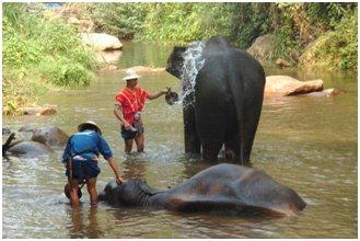 Excursion privée d'une demi-journée au camp des éléphants et aux cascades de Mae Sa