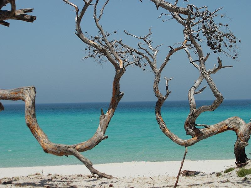 cap-corse-plage-saleccia-excursion-guidee