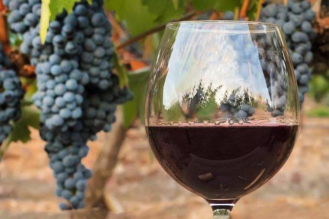 visite-des-vignobles-du-medoc-avec-degustation-vin
