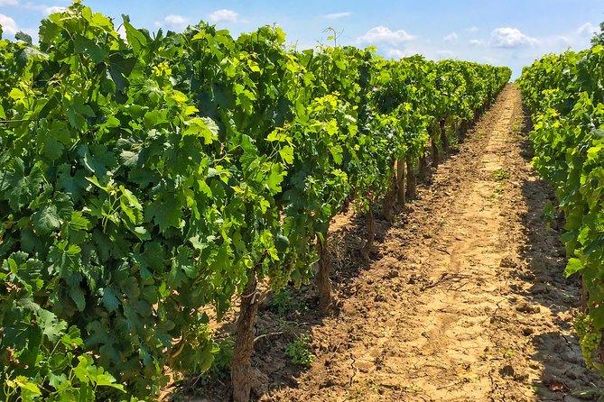 visite-de-domaine-viticole-a-sancerre