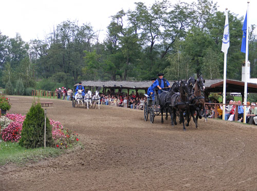 spectacle-chevaux-ferme-traditionnelle