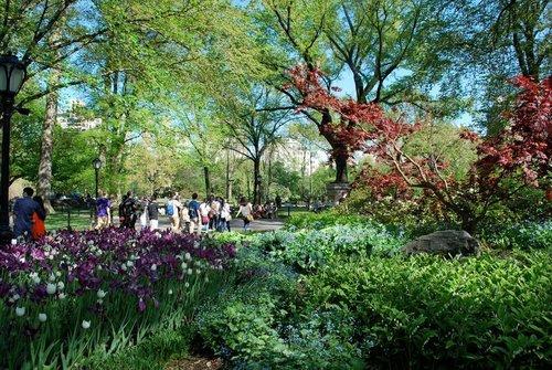 Central Park*