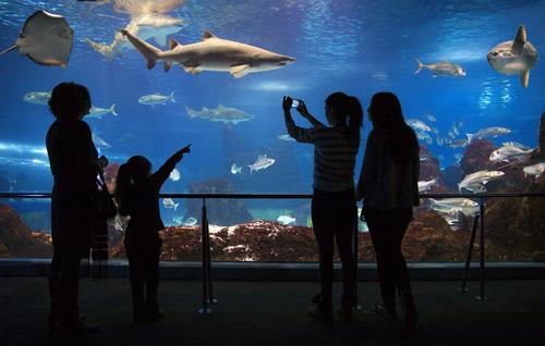 Visite de l'aquarium de Barcelone