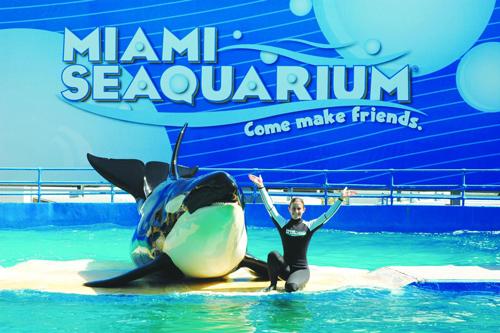 entree-au-seaquarium-spectacle-de-dauphins-miami