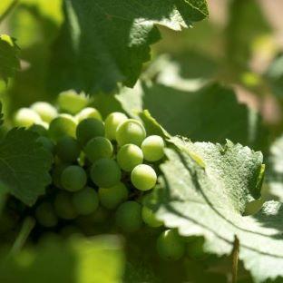 excursion-a-sainte-victoire-avec-degustation-vin