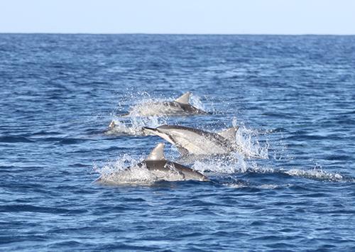 Croisière d'une journée d'observation des dauphins
