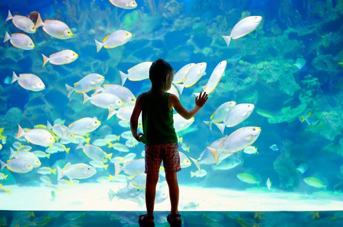 Billet d'entrée au Musée océanographique et à l'aquarium de Monaco