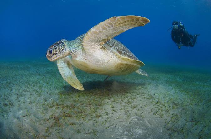 Expérience de plongée initiatique dans le sud de la Grande Canarie avec plongée depuis le bateau