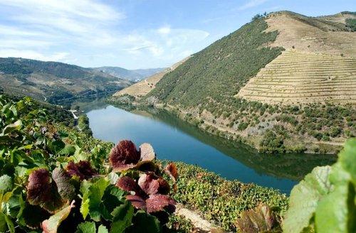 Visite d'une journée complète dans la vallée du Douro avec déjeuner et dégustation de vins