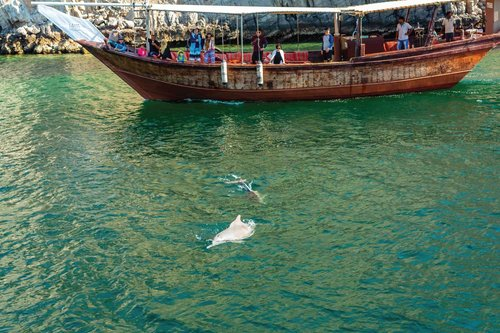 croisiere-mascate-pour-observer-les-dauphins