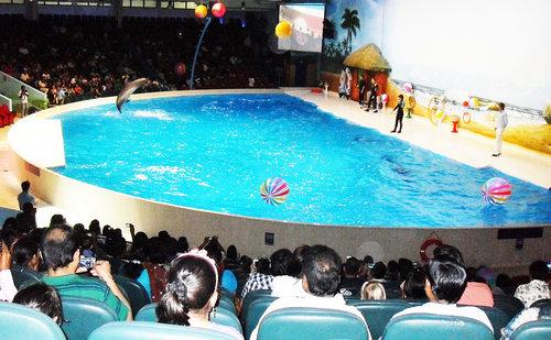 spectacle-dauphin-au-dolphinarium-dubai
