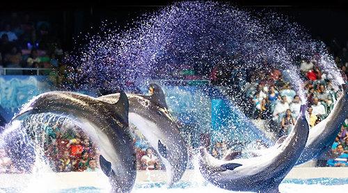 Spectacle de dauphins et de phoques