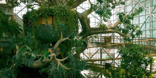 Billet d'entrée au biodôme Green Planet de Dubaï