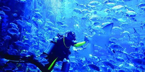 Billet pour Dubai Aquarium & Underwater Zoo - Explorer Package