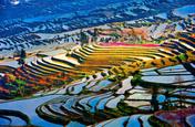 Rizières de Yuanyang en Chine