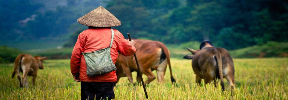 Paysage vietnam trek randonnée