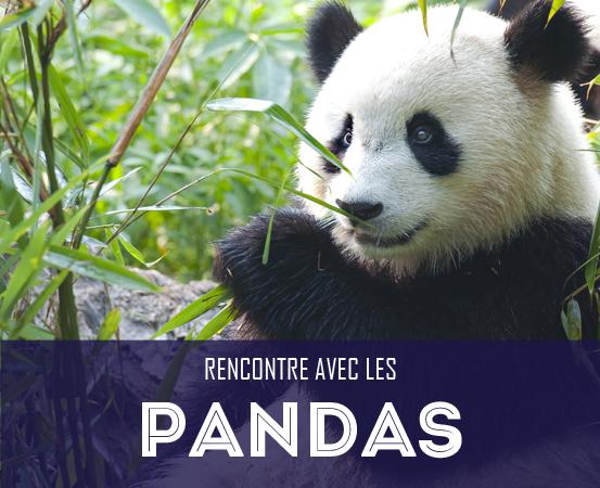 Pandas géants du Sichuan