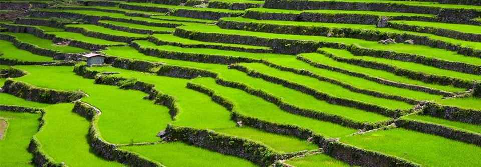 Les rizières en terrasses aux Philippines