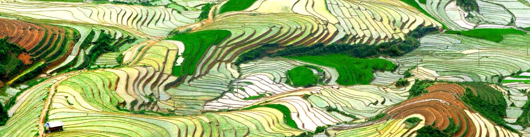 Rizières du Yunnan Chine
