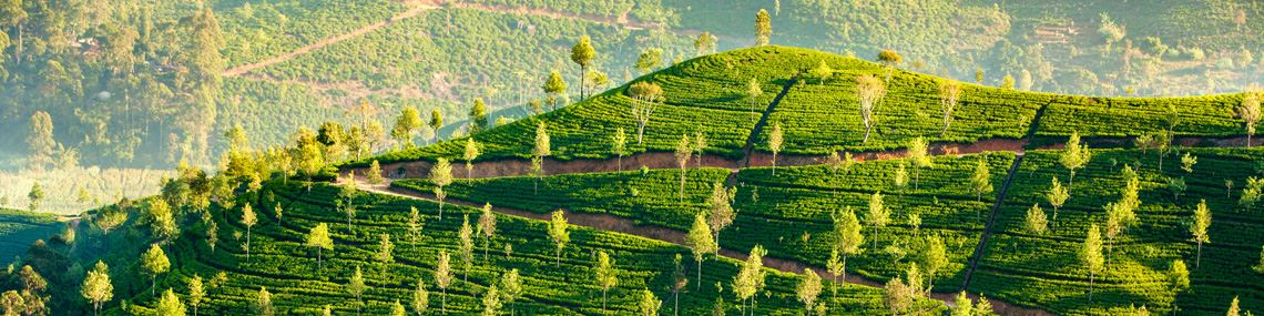 sri-lanka-collines-the
