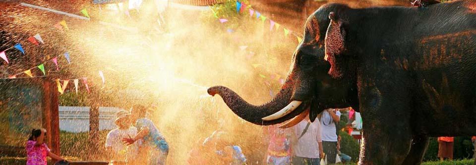 Elephant de Thailande lors du nouvel an Thai