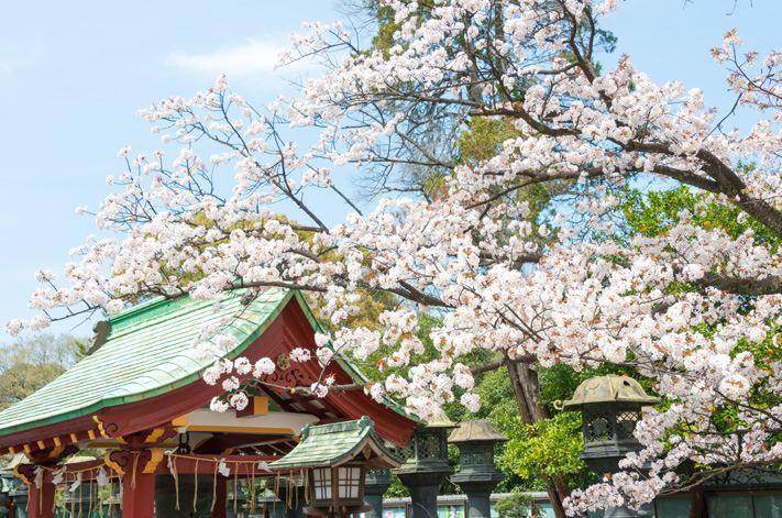 tokyo-cerisiers-japon