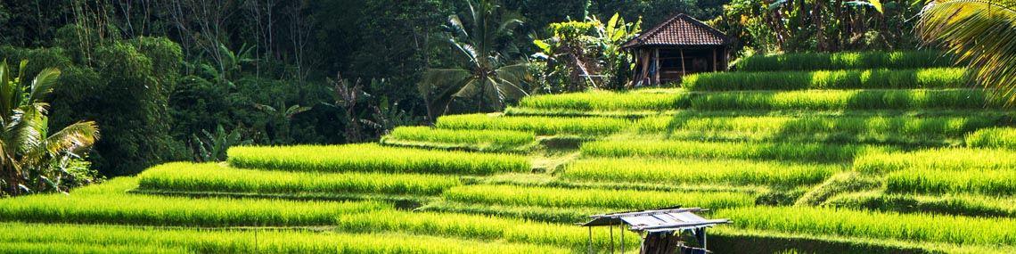ubud-indonesie-rizieres