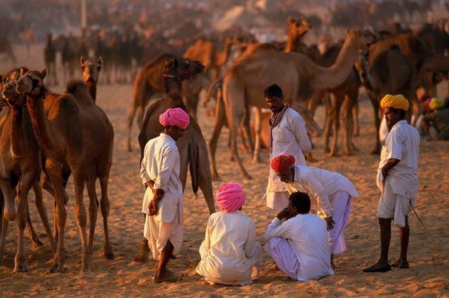 Rajasthan Essentiel, Foire de Pushkar - Inde
