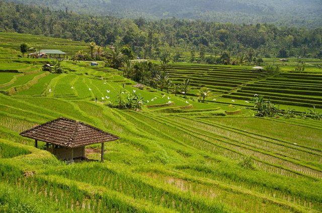 a-indonesie-bali-jatiluwih-rizieres-1-go