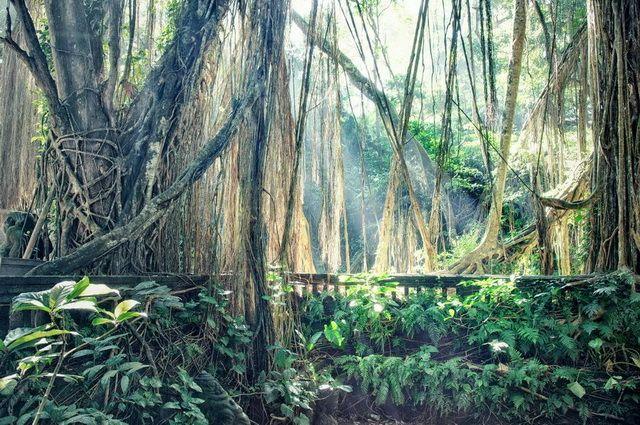 a-indonesie-bali-ubud-jungle-go