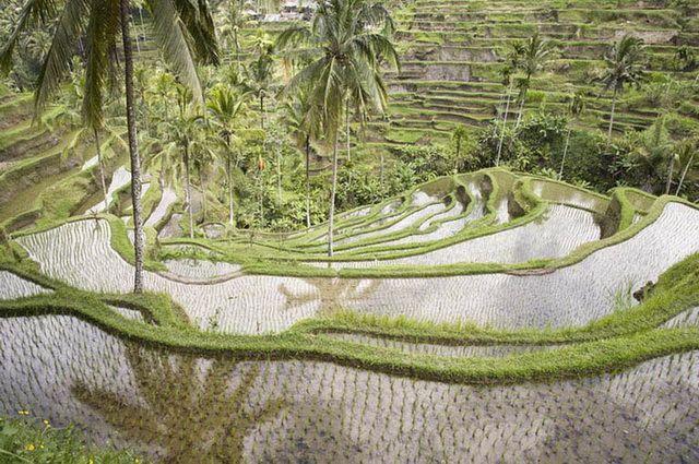 a-indonesie-bali-ubud-rizieres-2-go
