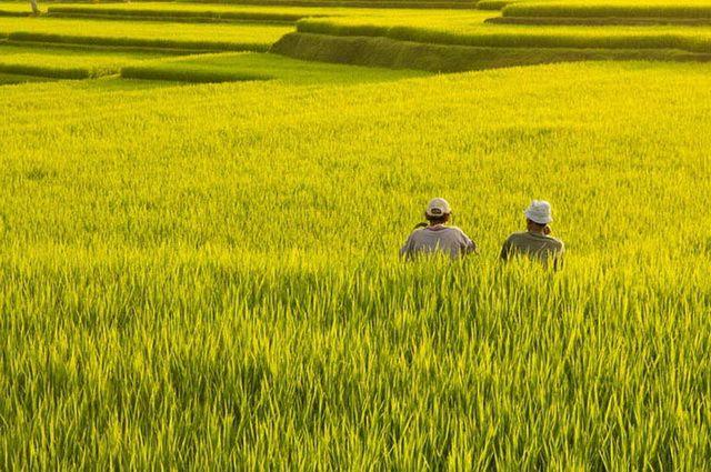 a-indonesie-bali-ubud-rizieres-5-go