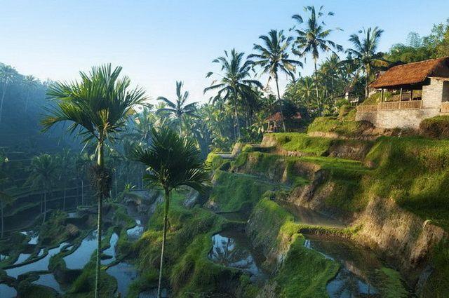 a-indonesie-bali-ubud-rizieres-6-go