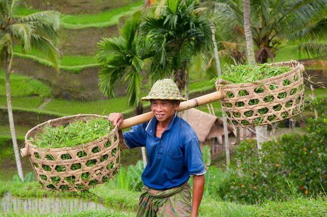a-indonesie-bali-ubud-rizieres-homme-go