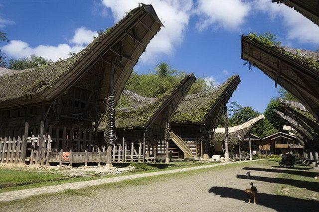 a-indonesie-celebes-sulawesi-pays-toraja-14-go
