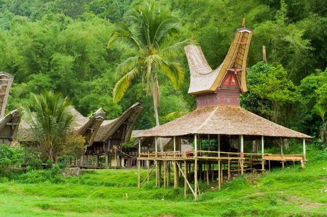 a-indonesie-celebes-sulawesi-pays-toraja-6-go