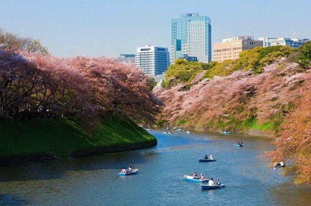 a-japon-tokyo-parc-kitanomaru-go